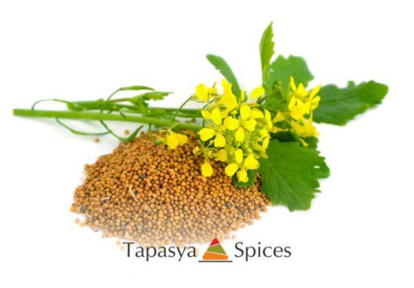 Sarso Kali Mustard Seed Brown supplier Tapasya Spices