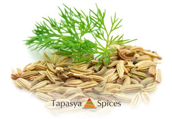 Sonf Moti Fennel Seeds with fresh fennel